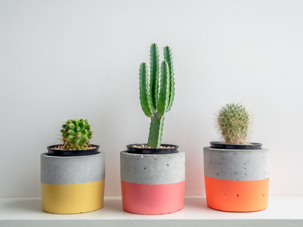 3 round succulent planters painted with neon colors
